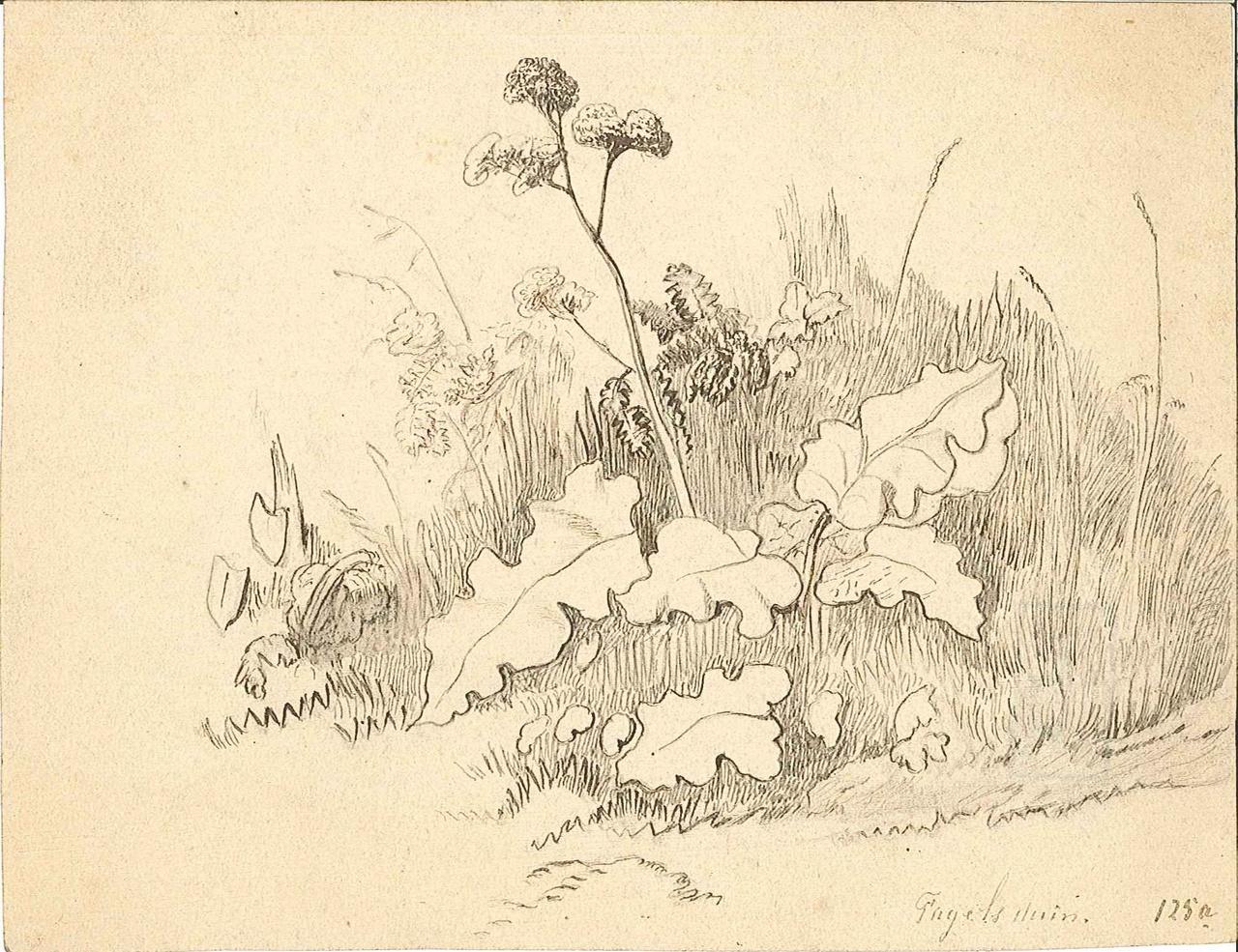 1237-10.jpg