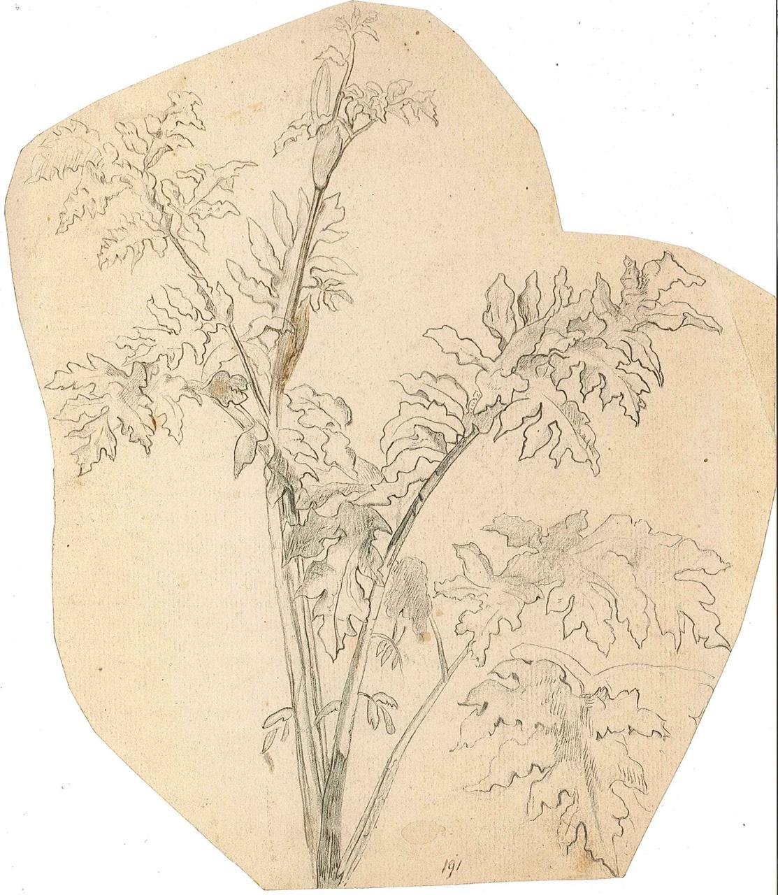 1237-16.jpg