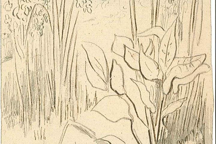 1237-4.jpg