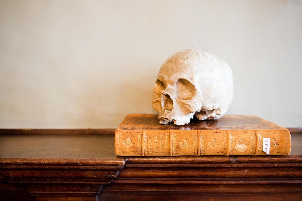 Gipsafdruk van de schedel van Hendrik van Gelre